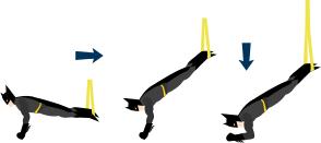 trx handstand