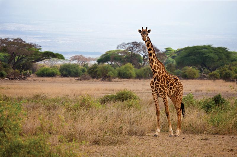 RUNNING AFRICA SAFARICOM MARATHON